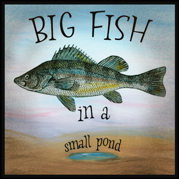 Idiom gallery for Big fish little pond